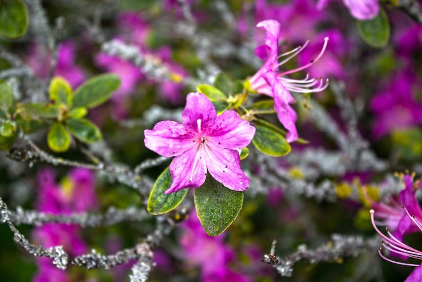 03 Chinesischer Garten die Blumeblüte hdr