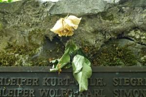 Die verwelkte Rose am Schloss Braunfels
